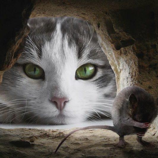 gato-raton